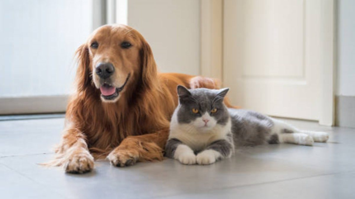 How CBD Oil For Pets Works