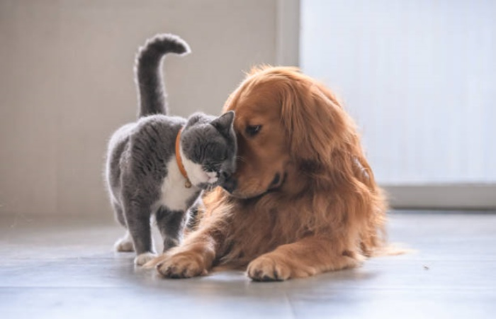 CBD Oil and Your Pet